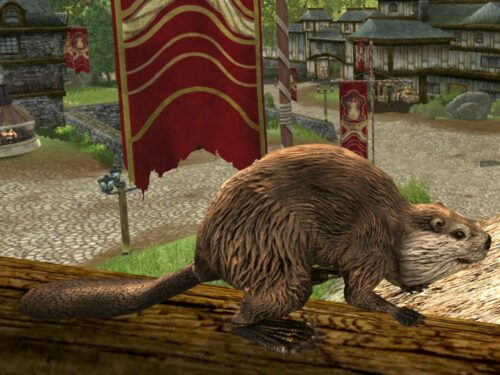 Beaver Pet from a Different View