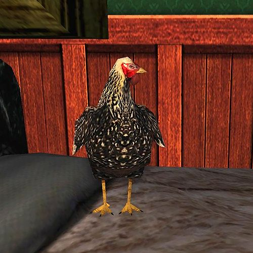Dorking Chicken Cosmetic Pet - now available at the Buried Treasure Event