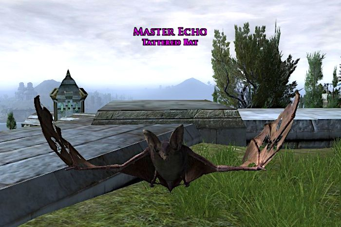 Tattered Bat Pet