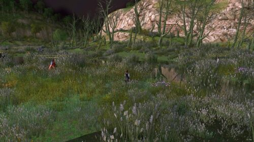 Ruby Fireflies can be found in this part of Rushock Bog in The Shire