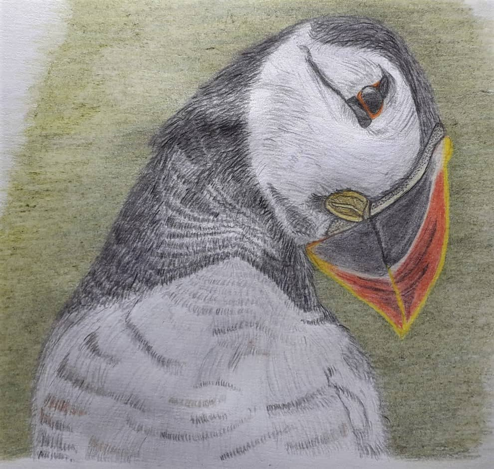My first try of drawing a puffin's head